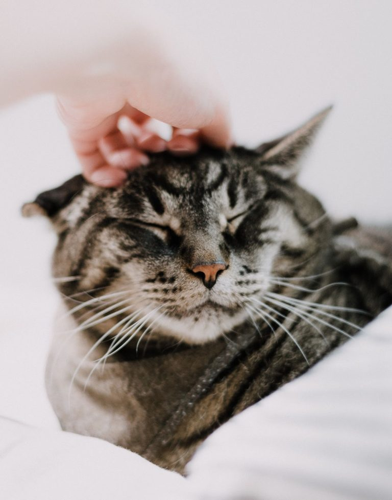 How Do You Say Sorry To A Cat? Do Cats Understand When You Say Sorry?