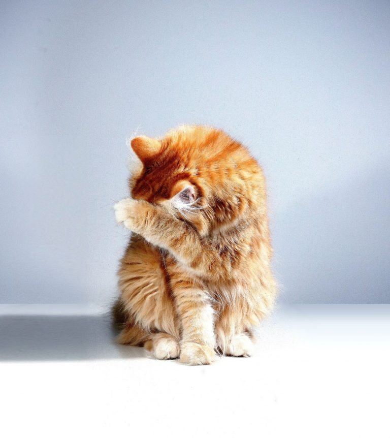 How Do Cats Say Sorry? 4 Ways Cat Apologize to Their Owners