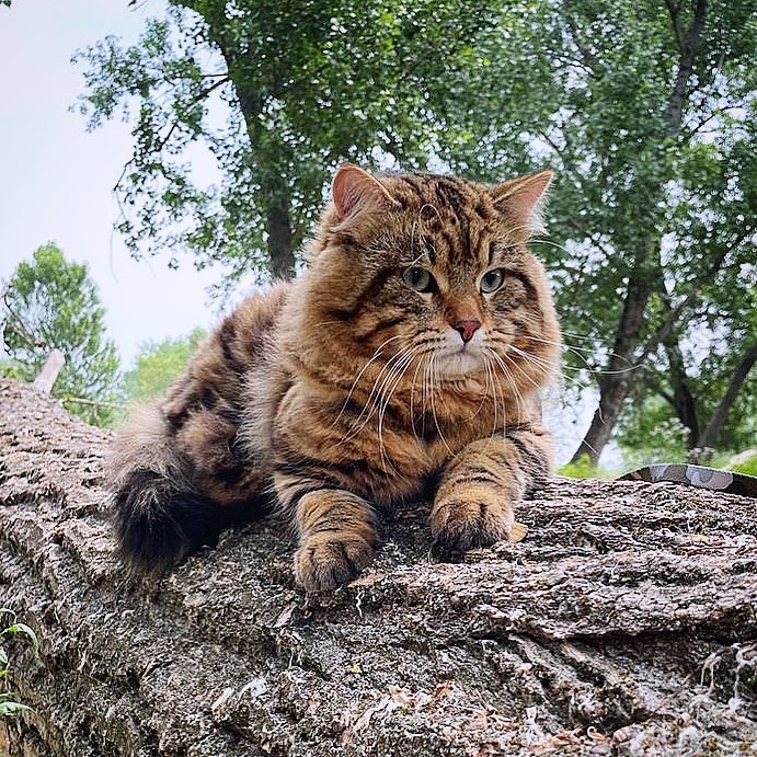 Are Siberian Cats Hypoallergenic? 9 Effective Ways to Stop Being Allergic to Cats